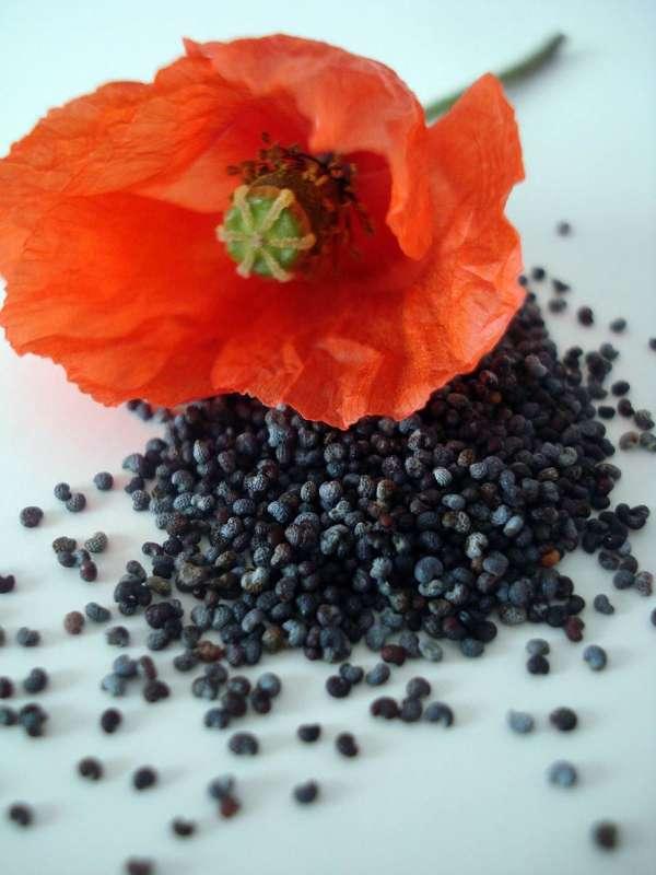 semillas de amapola remedios
